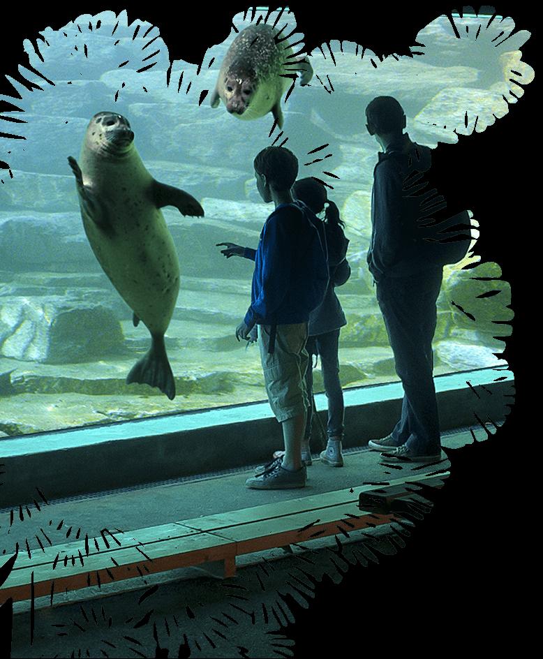 enfants espace aquatique domaine de branféré