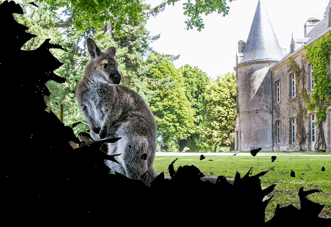 wallaby domaine zoologique branféré